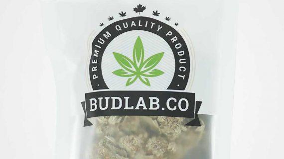 Bud Lab AAA Hybrid NYC Diesel Grab Bag