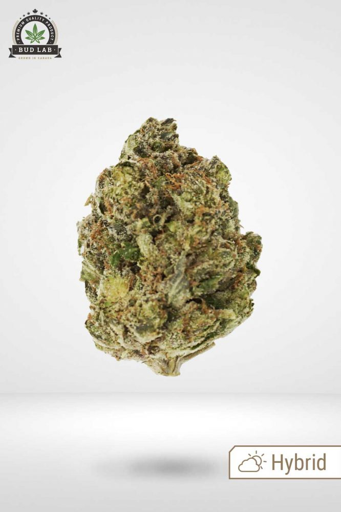 Bud Lab AAA Hybrid Tom Ford Pink