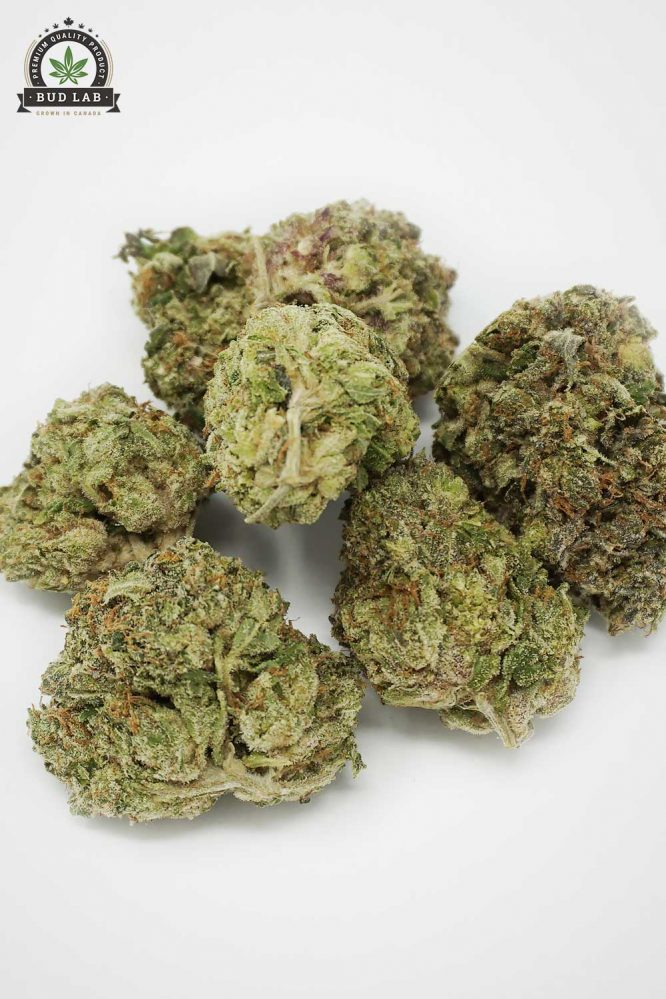Bud Lab AAA Hybrid Tom Ford Pink Flower