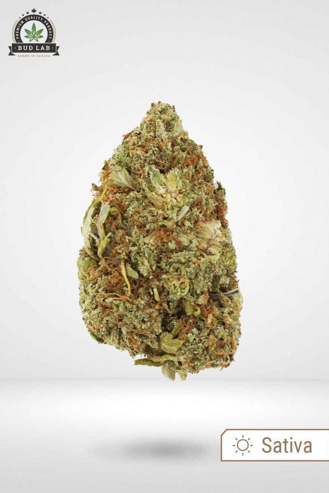 Bud Lab AAA Sativa Zelly's Gift