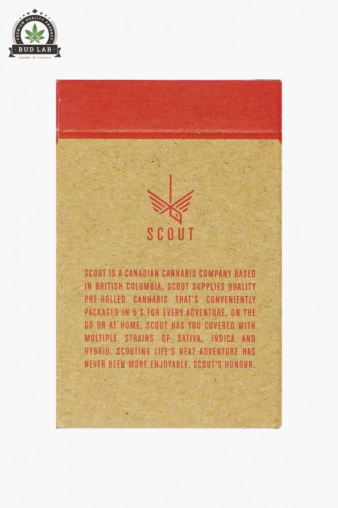 Scout Pre-Rolls Moby Dick 5 Pack Back