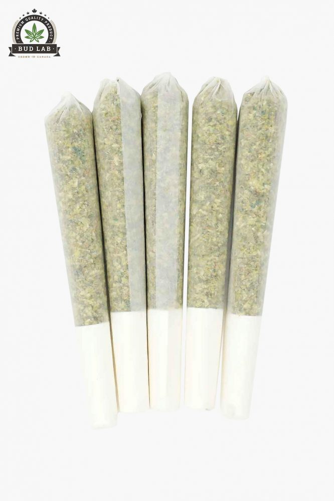 Scout Pre-Rolls Zombie Kush 5 Pack Joints