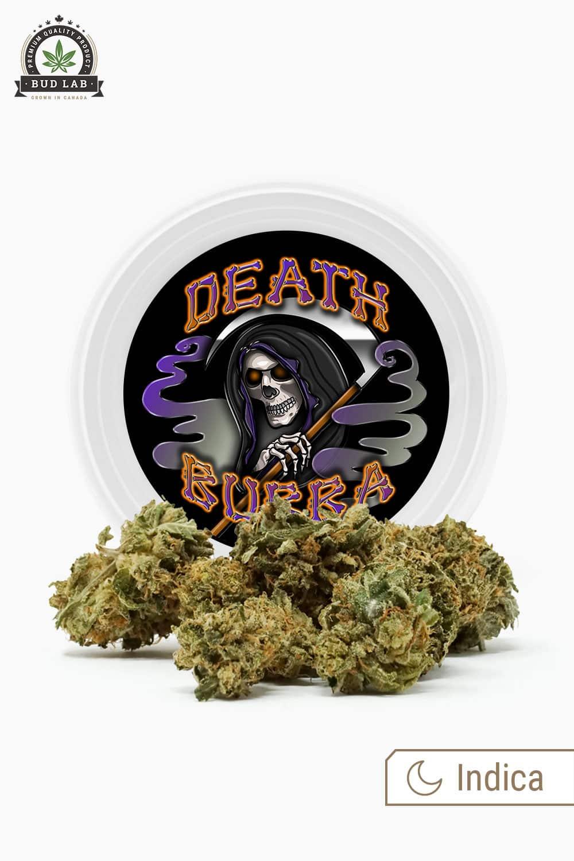 Westcoast Cali Death Bubba Indica Strain