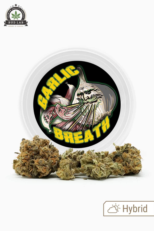 Westcoast Cali Garlic Breath Hybrid