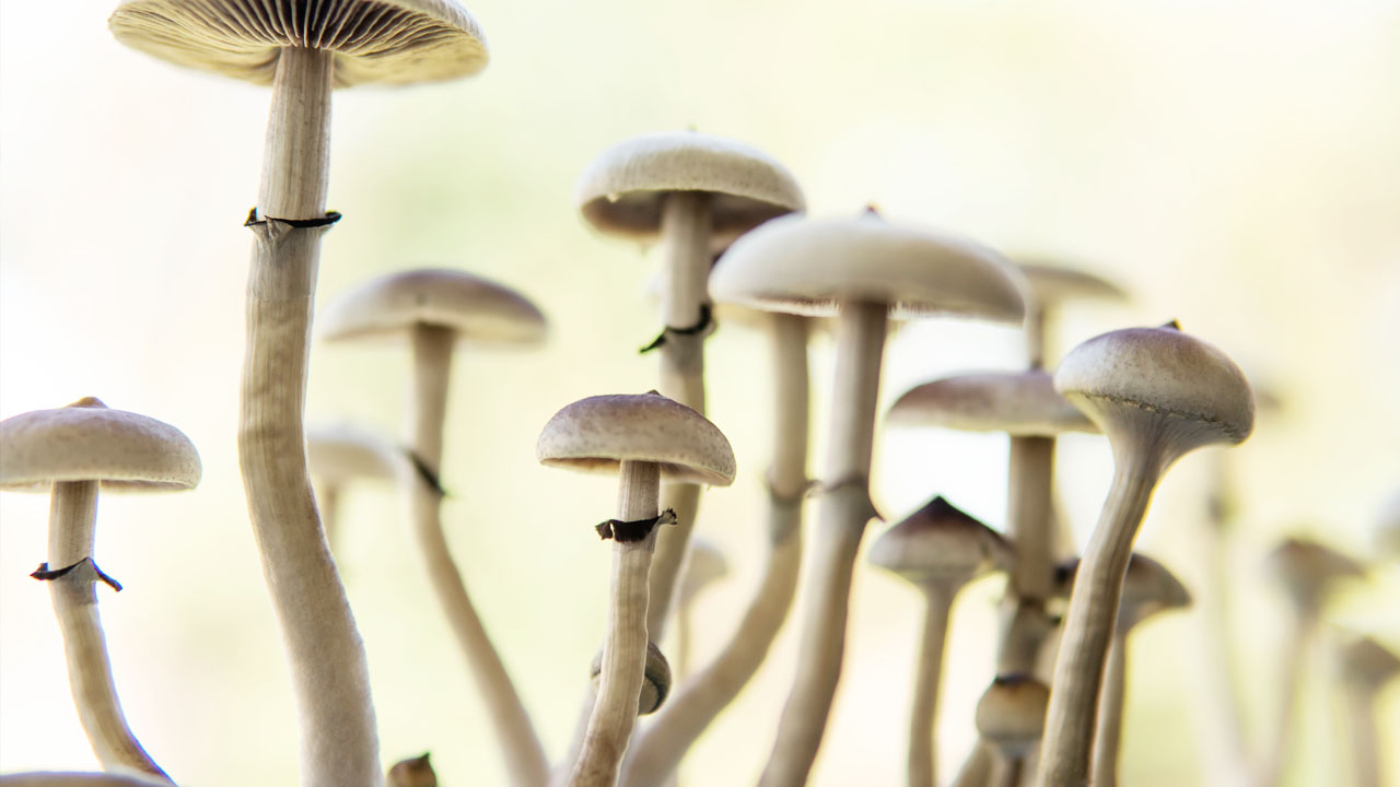 All You Need To Know About Microdosing Magic Mushrooms