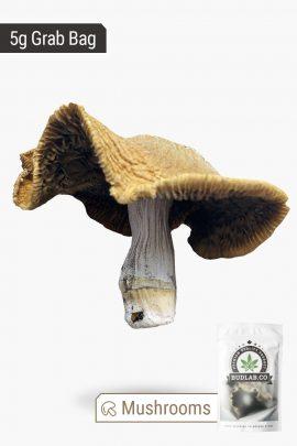 Blue Meanies Magic Mushrooms 5g Grab Bag Full View of Shroom