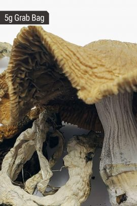 Blue Meanies Magic Mushrooms 5g Grab Bag Close Up of Shroom