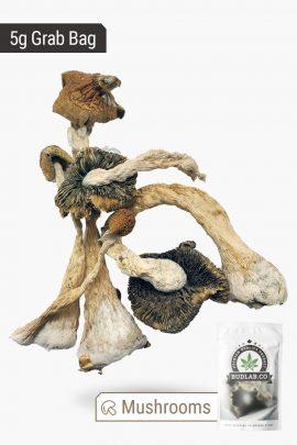 Blue Meanies Magic Mushrooms 5g Grab Bag Full View of Shrooms