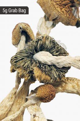 Metz Magic Mushrooms 5g Grab Bag Close Up of Shroom