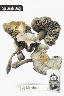 Blue Meanies Magic Mushrooms 5g Grab Bag Full View of Shrooms 2