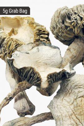 Albino Avery Magic Mushrooms 5g Grab Bag Close Up of Shrooms