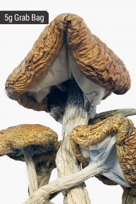 Cambodian Cubensis Magic Mushrooms 5g Grab Bag Close Up of Shrooms