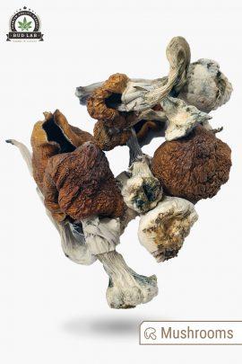 B+ Magic Mushrooms 1g Full View of Shrooms