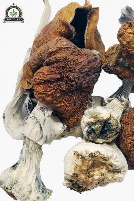 B+ Magic Mushrooms 1g Close Up of Shrooms