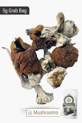 B+ Magic Mushrooms 5g Grab Bag Full View of Shrooms