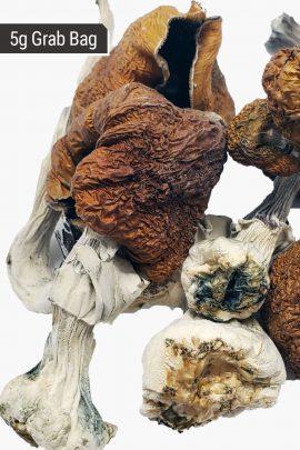 B+ Magic Mushrooms 5g Grab Bag Close Up of Shrooms