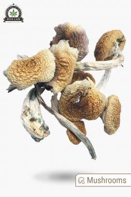 Penis Envy Magic Mushrooms 1g Full View of Shrooms