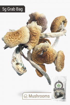 Penis Envy Magic Mushrooms 5g Grab Bag Full View of Shrooms