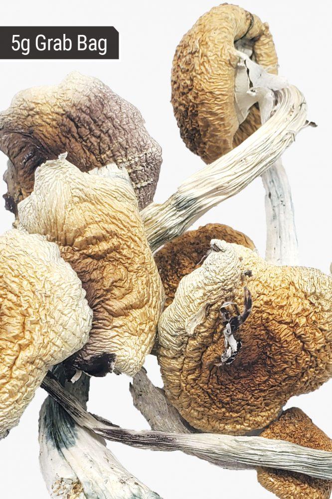 Penis Envy Magic Mushrooms 5g Grab Bag Close Up of Shrooms
