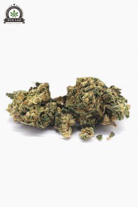 Westcoast Cali Bud Lab Mimosa Kush 2