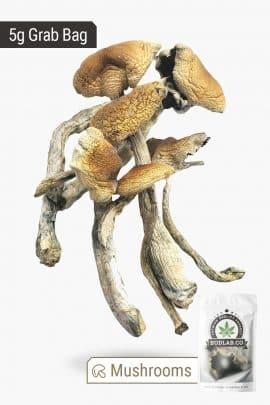 Bud Lab Brazilian Magic Mushrooms 5g 2