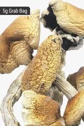 Bud Lab Brazilian Magic Mushrooms 5g