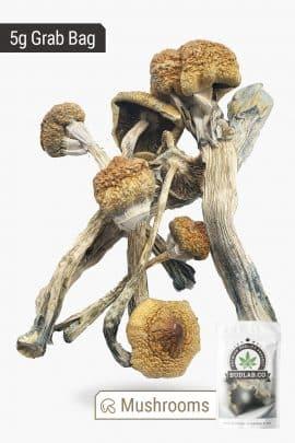 Bud Lab Huautla Magic Mushrooms 5g