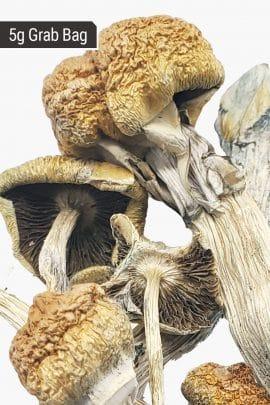 Bud Lab Huautla Magic Mushrooms 5g 2