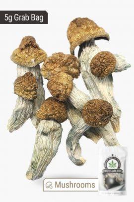 Bud Lab Melmac Magic Mushrooms 5g