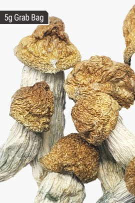 Bud Lab Melmac Magic Mushrooms 5g 2