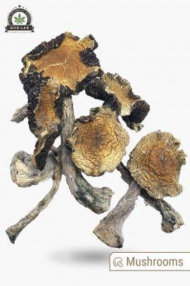 Bud Lab Amazonian Magic Mushrooms 1g 2