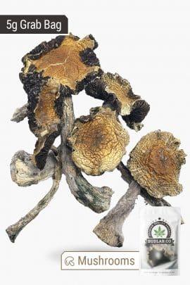 Bud Lab Amazonian Magic Mushrooms 5g 2