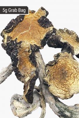 Bud Lab Amazonian Magic Mushrooms 5g