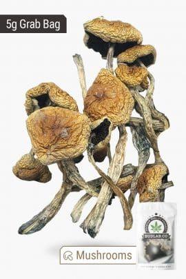 Bud Lab Wollygong Magic Mushrooms 5g 2
