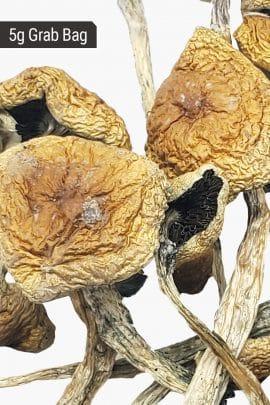 Bud Lab Wollygong Magic Mushrooms 5g
