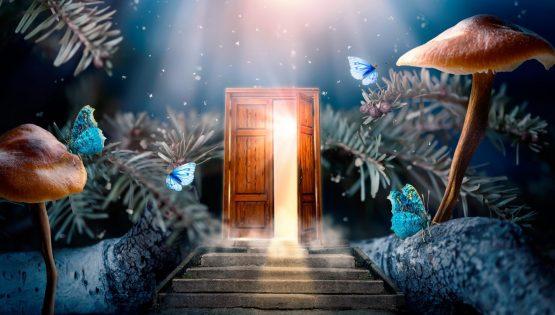 Magic Mushroom Door Opening Trip