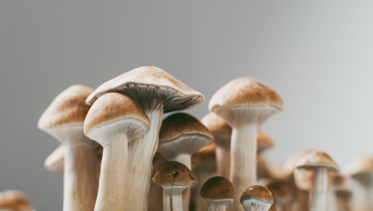 "Why The Huautla Magic Mushroom Is A ""Must-Try"" Shroom!"